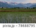 田植え後の水田の水面に映る美しい白馬三山の朝焼け 長野県白馬村 78688795
