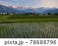 田植え後の水田の水面に映る美しい白馬三山の朝焼け 長野県白馬村 78688796