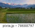 田植え後の水田の水面に映る美しい白馬三山の朝焼け 長野県白馬村 78688797