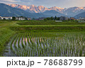 田植え後の水田の水面に映る美しい白馬三山の朝焼け 長野県白馬村 78688799