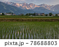 田植え後の水田の水面に映る美しい白馬三山の朝焼け 長野県白馬村 78688803