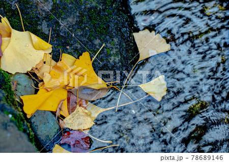 公園の水に浮かぶイチョウの葉っぱ 78689146