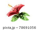 ハイビスカス 赤 横向き 水彩風 78691056