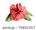 ハイビスカス 赤 水彩風 78691057
