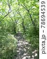 森の中の小道の風景 78694539