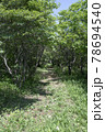 森の中の小道の風景 78694540
