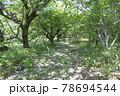 森の中の小道の風景 78694544