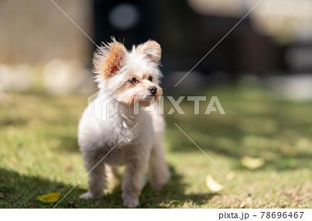 犬 ライフスタイル 78696467