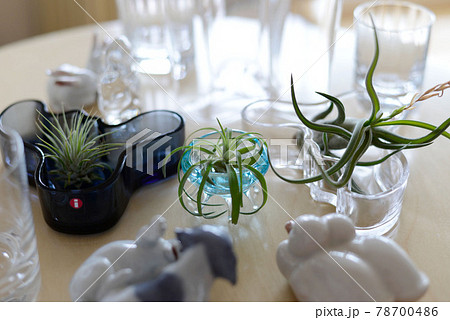 明るい日差しの中 ガラスの中のエアープランツの植物園 78700486