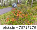 (長野県)美ヶ原高原 レンゲツツジ咲く白樺平を走る車 78717176