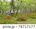 (長野県)美ヶ原高原 レンゲツツジ咲く白樺平を走る車 78717177