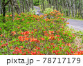 (長野県)美ヶ原高原 レンゲツツジ咲く白樺平を走る車 78717179
