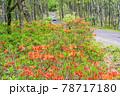 (長野県)美ヶ原高原 レンゲツツジ咲く白樺平を走る車 78717180