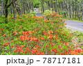 (長野県)美ヶ原高原 レンゲツツジ咲く白樺平を走る車 78717181