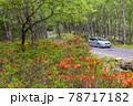 (長野県)美ヶ原高原 レンゲツツジ咲く白樺平を走る車 78717182
