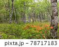 (長野県)美ヶ原高原 レンゲツツジ咲く白樺平を走る車 78717183