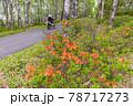 (長野県)美ヶ原高原 レンゲツツジ咲く白樺平を走るオートバイ 78717273