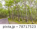 (長野県)美ヶ原高原 白樺平を走る高原道路 78717523