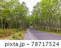 (長野県)美ヶ原高原 白樺平を走る高原道路 78717524