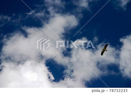 中央アジアの山岳地帯上空を飛ぶエジプトハゲワシ 78732235