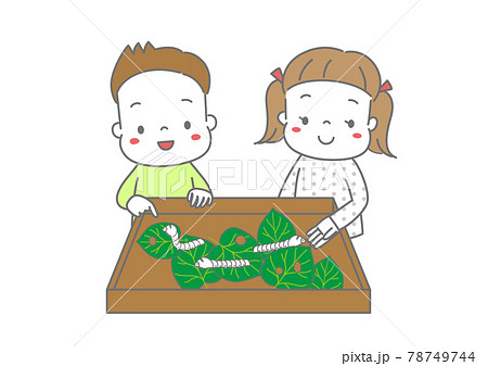 飼育箱の蚕を観察する小学生 78749744