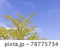 太陽の光が当たる瑞々しい新緑の木 78775734
