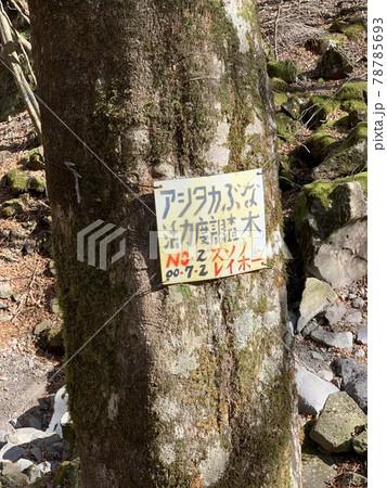愛鷹山山中にあるアシタカぶな案内 78785693