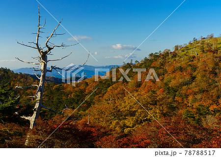 紅葉樹林と枯れ木(奈良県 大台ヶ原山) 78788517