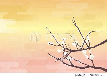 咲き始めの梅 78788572