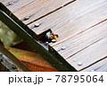 ベンチ ツノマタタケ 78795064