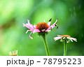ユキナセア 花 78795223