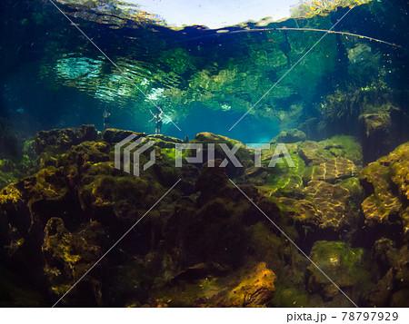 セノーテの水面を水中から見上げる (プラヤ・デル・カルメン、メキシコ) 78797929