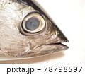キジメの顔と大きな眼 78798597