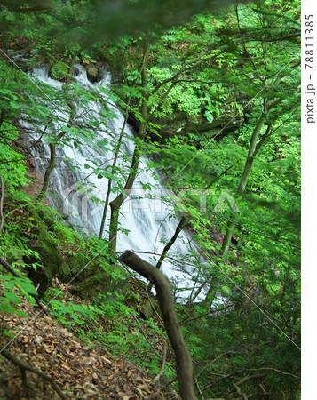 回顧の滝 回顧の吊り橋の手前の滝(みかえりの滝) 78811385