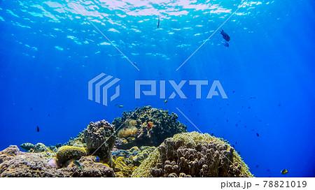沖縄 阿嘉島のクマノミと珊瑚礁 水中写真 78821019