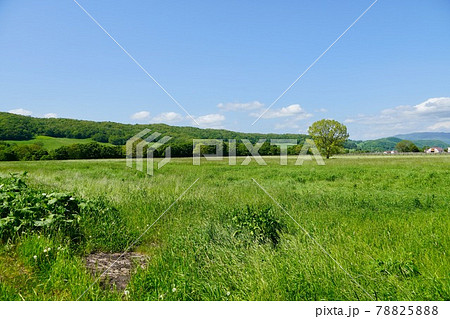 北海道の牧草地(新ひだか町のあたり) 78825888