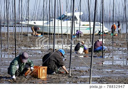 潮干狩り(有明海) 78832947