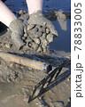 潮干狩り(有明海) 78833005