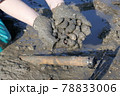 潮干狩り(有明海) 78833006