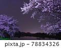 埼玉県さいたま市と富士見市の市境にあるびん沼川の夜桜 78834326
