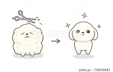ドッグトリミング before and after 78846882