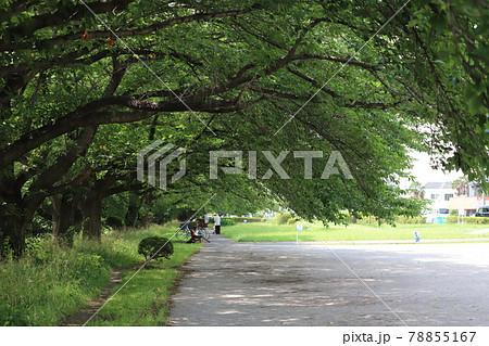日本の初夏の公園での林と木陰の様子 78855167