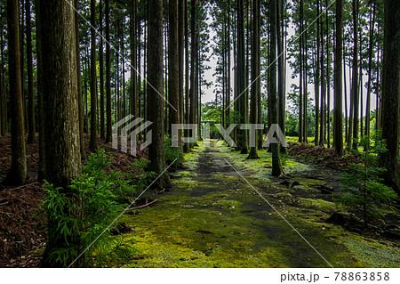 伊豆大島の東京都大島町にある苔むす参道の波治加麻神社の風景 78863858