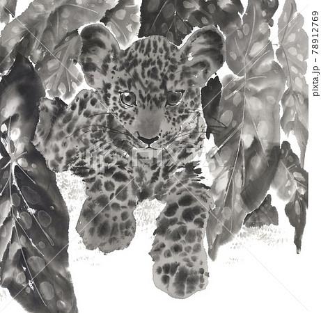 ベゴニアの中でくつろぐ豹 墨絵イラスト 78912769