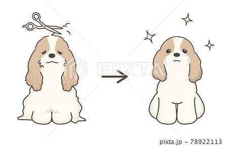 犬のトリミング ビフォアアフター コッカースパニエル 78922113