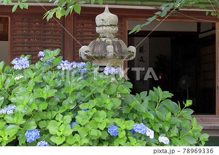 藤森神社 満開のあじさい園 78969336