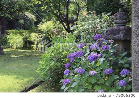 青系の紫陽花と蟷螂のある緑豊かの山の中の風景 79006300