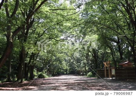 神社の木製の鳥居の見える緑の樹々に囲まれた糺の森の道のある風景 79006987