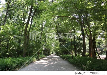 緑の大樹が茂るトンネルのような下鴨神社の参道の風景 79006990