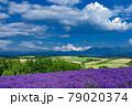 北海道・美瑛町 初夏の花畑の風景 79020374